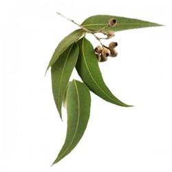 Eucalyptus Scrubzout (300ml)