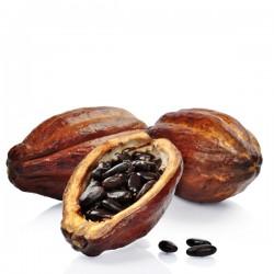 Cacao (10ml)