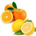 Appelsien & Citroen Scrubzout (300ml)